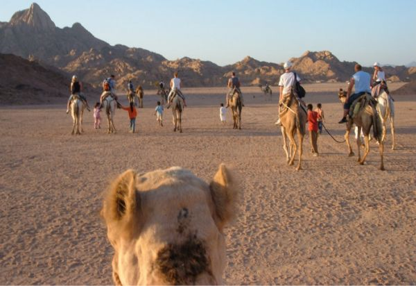 Bedouins Discount Adventure in Egypt Desert.