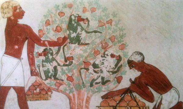 Beni Hassan Tombs, Al Minya Discount Trips.