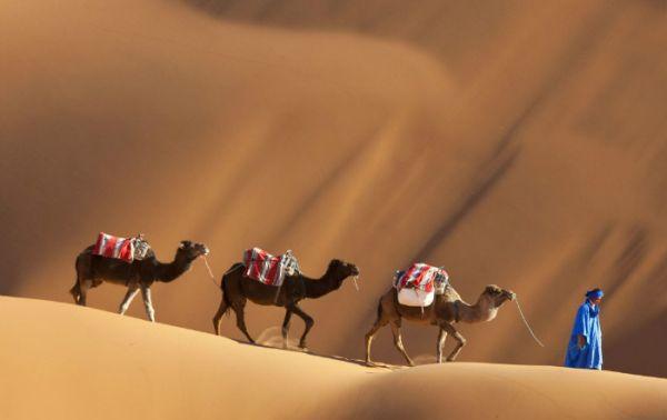 Zagora Dunes Traveling, Morocco