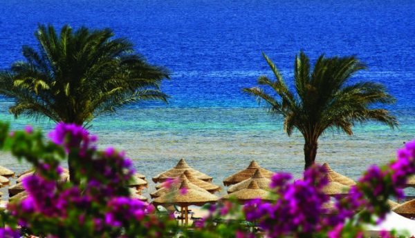Tiran Island Snorkel, Red Sea Resort.