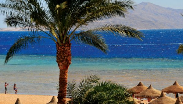 Tiran Island Snorkeling, Red Sea Coast.