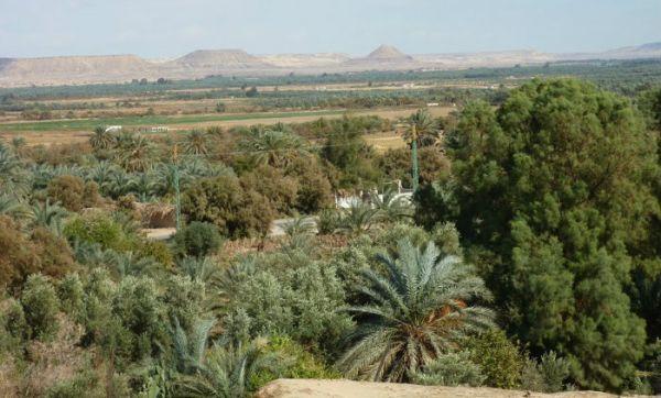 Bahariya Oasis Discount Desert Camping Tripping