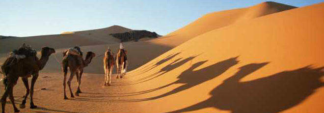 Egypt Safari Trips