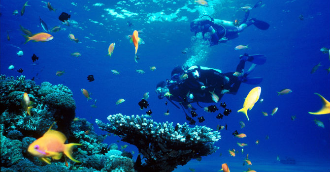 Snorkeling Port Ghalib | Port Ghalib Snorkeling Tour From Marsa Alam