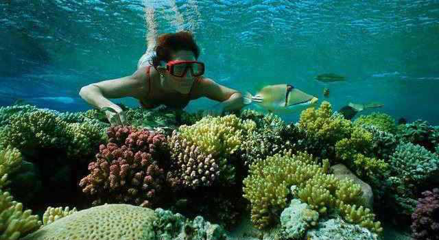 Ras Mohammed Snorkeling Tours From Sharm Marina